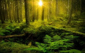 shrubs, sunlight, ferns, lens flare, trees, moss