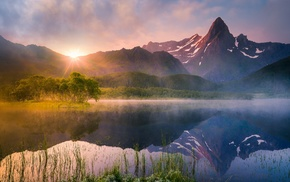 mist, trees, sunrise, summer, Norway, nature