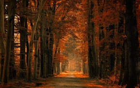 trees, dirt road, nature, amber, path, fall