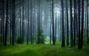 nature, mist, spring, sunrise, grass, trees