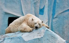 polar bears, nature, animals