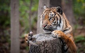 big cats, tiger, nature, tree stump, depth of field, animals