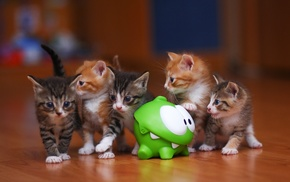 photography, kittens, om nom, omnom