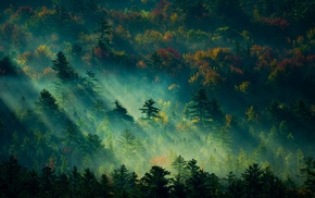 mist, sunbeams, England, sunrise, nature, landscape