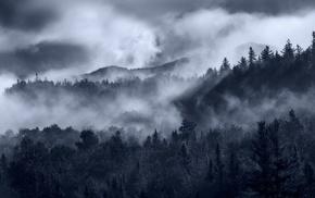 nature, clouds, landscape, mist, sunrise, trees