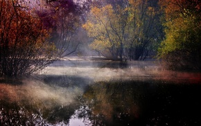 forest, fall, nature, colorful, water, mist