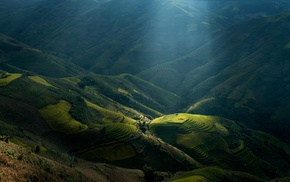 rice paddy, sun rays, green, landscape, Vietnam, terraces