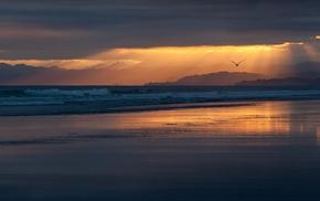 beach, sunset, sun rays, nature, landscape, animals