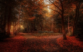 fall, sunlight, park, landscape, shrubs, path