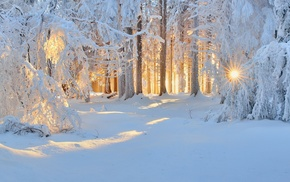 sunlight, nature, cold, sunrise, winter, landscape