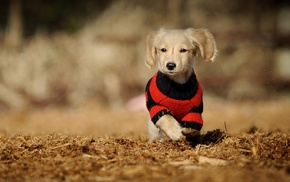 animals, puppies, dog