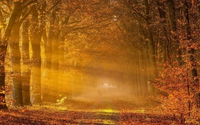 park, trees, path, fall, branch, sun rays
