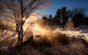 shrubs, nature, winter, sunrise, forest, cold