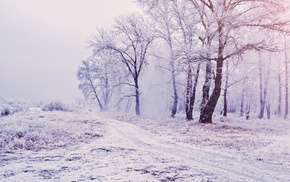 winter, mist, path, snow, nature, white