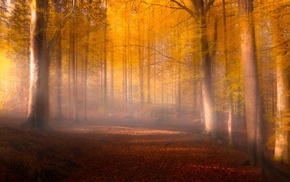 forest, red, landscape, trees, mist, fall