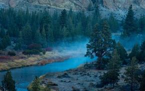 morning, forest, blue, shrubs, trees, landscape