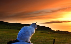 sunset, landscape, field, clouds, animals, pet