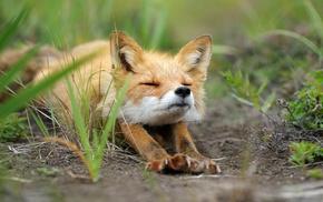 fox, digital art, animals