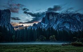 forest, sunset, pine trees, mountain, nature, mist