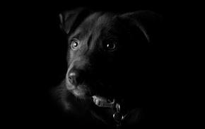 nature, artwork, portrait, dog, black background, collars