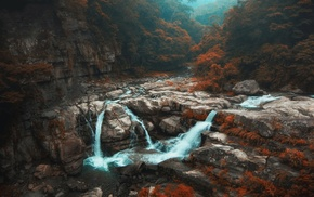 Taiwan, river, nature, shrubs, fall, forest