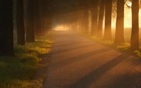 road, trees, sun rays, grass