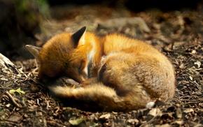 forest, fox, depth of field, sleeping, animals, closeup