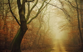 leaves, daylight, mist, moss, atmosphere, fall