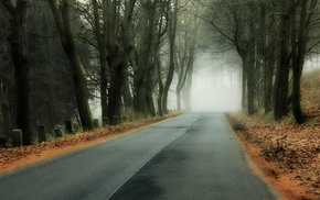 forest, leaves, wood, hill, road, fall