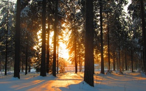 leaves, shadow, sunlight, snow, winter, forest