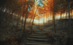 path, fall, forest, stairs, trees, landscape