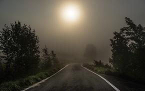 grass, morning, road, mist, nature, dark