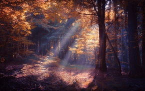 trees, leaves, nature, fall, shrubs, mist