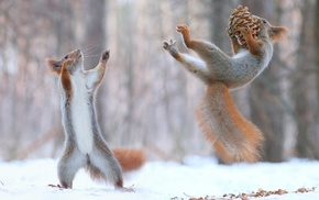 force, nature, winter, snow, animals, squirrel