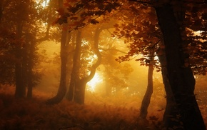 forest, sunrise, landscape, atmosphere, trees, nature