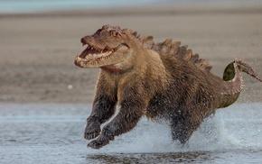 photo manipulation, crocodiles, bears, animals