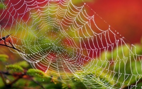 water drops, closeup, detailed, spiderwebs, branch, colorful