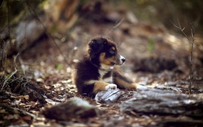baby animals, dog, depth of field, puppies, animals