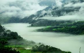 forest, river, nature, landscape, spring, mist