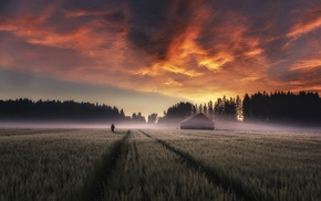 field, nature, mist, sunrise, farm, Finland