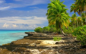 palm trees, clouds, nature, island, tropical, landscape
