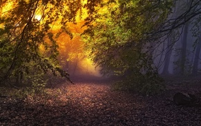 mist, leaves, fairy tale, atmosphere, path, sunrise
