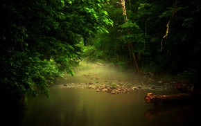trees, nature, mist, river, sunlight, foliage