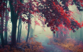 colorful, fall, trees, mist, atmosphere, sunrise