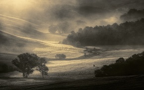 mist, monochrome, Tuscany, nature, trees, morning