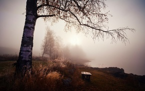 morning, lake, mist, calm, landscape, grass