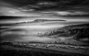 sheep, clouds, monochrome, forest, nature, sunrise