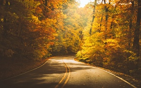 nature, fall, trees, road, forest