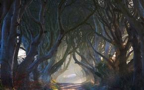 nature, tunnel, fairy tale, trees, road, landscape