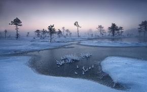 mist, winter, landscape, cold, trees, nature